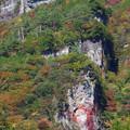 Photos: 崖の紅葉