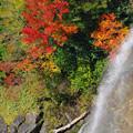 紅葉と落水