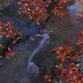 いろ葉の流れ