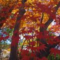 山内神社の紅葉