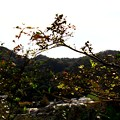 写真: 名も知らぬ小落の秋