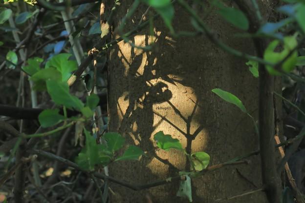 木漏れ日タトゥー