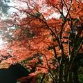 写真: 楓紅