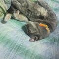 Photos: くるりんと寝た