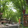新緑の定禅寺通