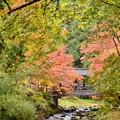 写真: 山寺の秋