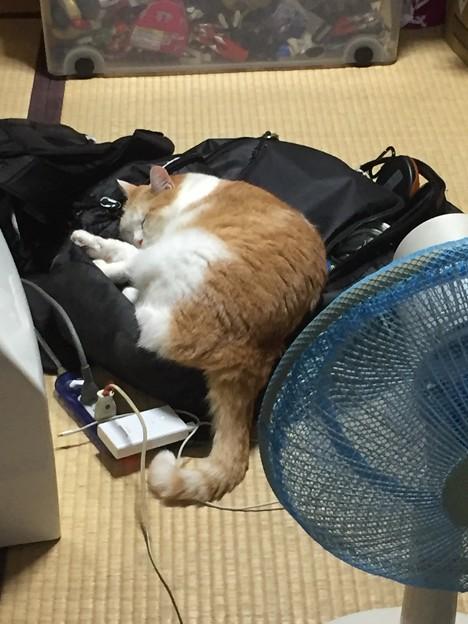 きみは  ラクロス小僧のバッグで昼寝