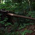 写真: 101砲台