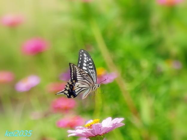 蝶の飛翔 NO.4