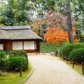岡山後楽園の紅葉 NO.4