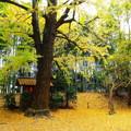 岡山後楽園の黄葉 NO.6