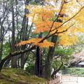 岡山後楽園の紅葉 NO.7