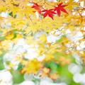 岡山後楽園の紅葉 NO.8