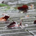 写真: 落ち葉の風景を楽しむ