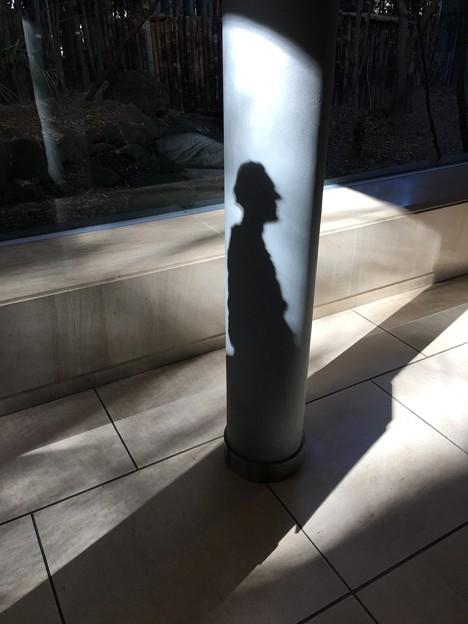 Photos: ジャコメッティ作「ディエゴの肖像」