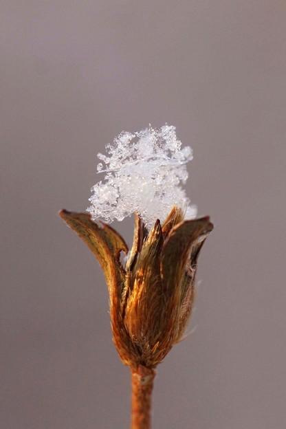 写真: 極上のかき氷?