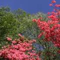 写真: 赤青緑