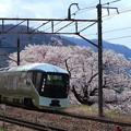 満開の桜と四季島@勝沼ぶどう郷駅4Kフォト