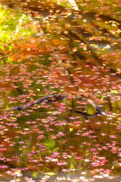 泉自然公園-7438