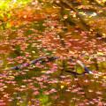 Photos: 泉自然公園-7438