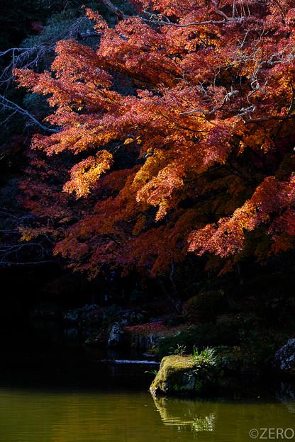 成田山公園-7652