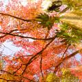 成田山公園-7673