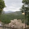 Photos: 金峯山寺(吉野町吉野山)蔵王堂前より
