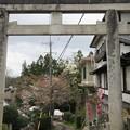 Photos: 吉水神社(吉野町吉野山)