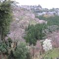 Photos: 如意輪寺(吉野町吉野山)中千本