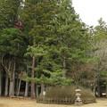 写真: 高野山壇上伽藍(高野町)登天の松と杓子の芝