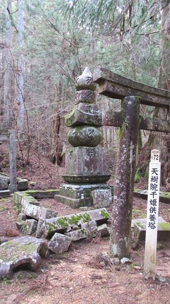 高野山金剛峯寺 奥の院(高野町)天樹院墓