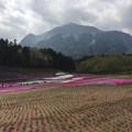 Photos: 17.04.25.羊山公園 (秩父市)芝桜の丘