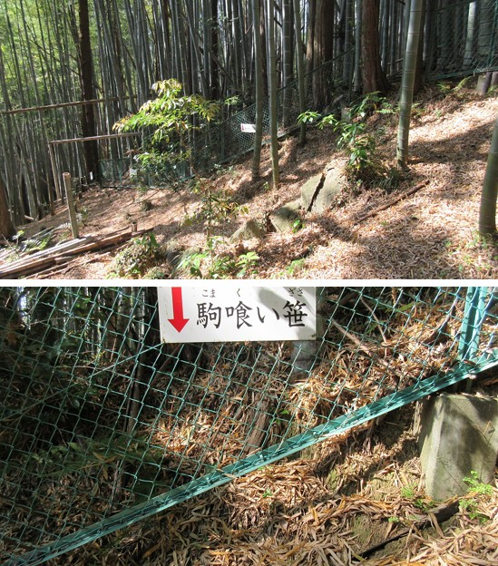 梶原山(清水区営 梶原山公園)駒喰い笹
