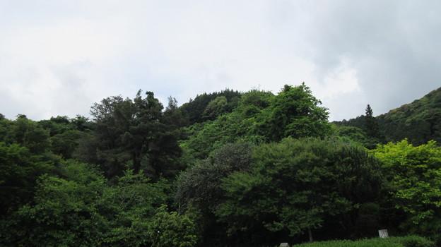 丸子城(駿河区)