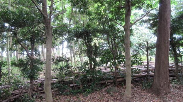 石脇城(焼津市)八幡郭