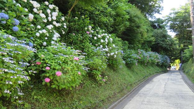 17.06.19.亀ヶ谷坂切通(鎌倉市)