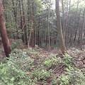 Photos: 岩櫃城(東吾妻町)搦手?