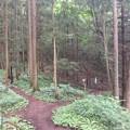 Photos: 岩櫃城(東吾妻町)先も郭
