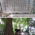 石神井城(練馬区。都立石神井公園)姫塚