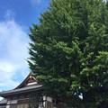 正光寺/来住野氏城館(あきる野市)