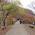 めがね橋(碓氷第三橋梁。安中市松井田町)