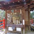八大神社(左京区)初代下り松