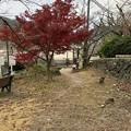 宇治川 あじろぎの道(宇治市)宇治川の桜並木