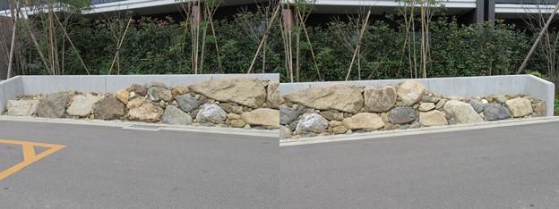 指月伏見城(伏見区)発掘石垣