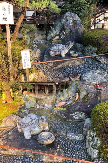 松尾大社(西京区)神使の庭 亀と鯉