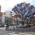 Photos: 二条御所跡(中京区)