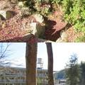 Photos: 八幡山城屋敷(秀次館。近江八幡市営 八幡公園)
