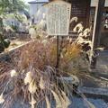 写真: 宗安寺(彦根市)血染めのすすき