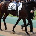写真: レイデオロ(2回東京12日 10R 第84回 東京優駿 日本ダービー(GI)出走馬) (1)