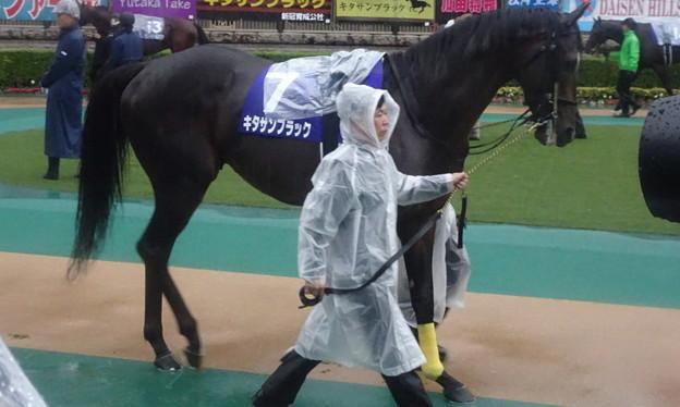 写真: キタサンブラック(4回東京9日 11R 第156回 天皇賞(秋)(GI)出走馬)